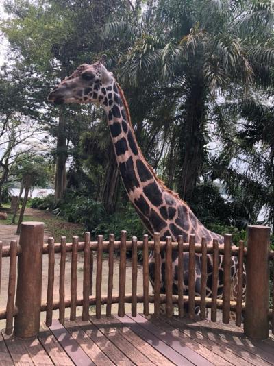 シンガポール旅行♫大人3人でたのしむ旅 6日目、7日目