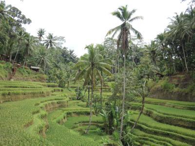 インドネシア バリ島2018・・・(5)ウブド郊外トレッキング 3本目はトゥンバカサ村からテガラランの棚田へ 民家で美しい野鶏も