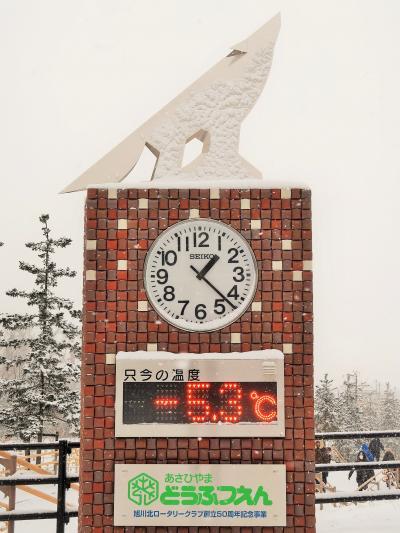 旭川-1 旭山動物園 雪の中-零下5.3度-滞在3時間自由に ☆レッサーパンダも走り回り