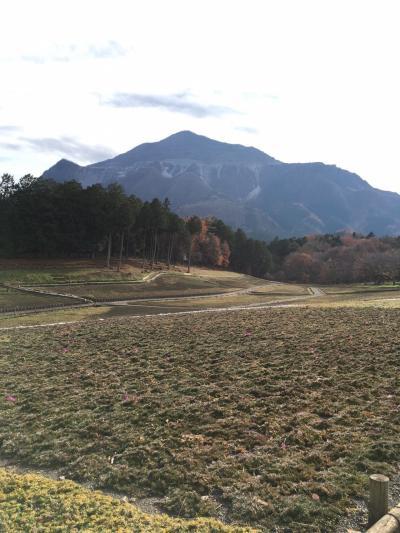 【北関東紀行】埼玉・秩父市で和銅の巨大硬貨と羊山公園の芝桜(草のみ)を見る