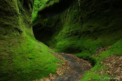 緑のベールの秘境!北海道支笏湖にある「苔の回廊」