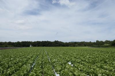 優雅な避暑バカンス♪ Vol.16 北軽井沢:高原野菜の美しい畑とトウモロコシのパエリア♪