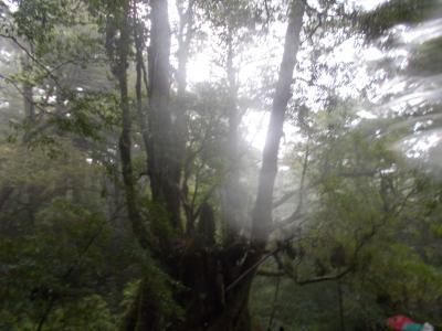 鹿児島と屋久島白谷雲水峡観光(その2)