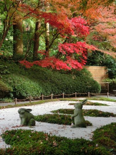 鎌倉 行く秋2018「明月院の後庭園の紅葉」