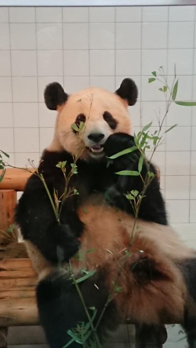家族旅 念願のパンダにご対面和歌山1泊2日の旅