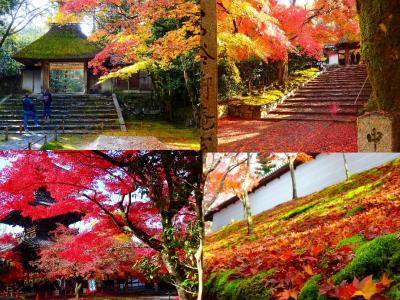 平成最後のゆく秋を惜しんで 半日だけの紅葉巡り