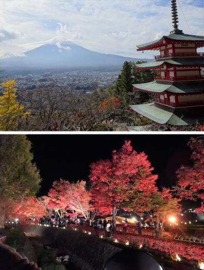 ウエディングベールを被った富士山がバスからチラッと!河口湖もみじ回廊ライトアップと新倉山浅間公園も行ったし、大満足~~