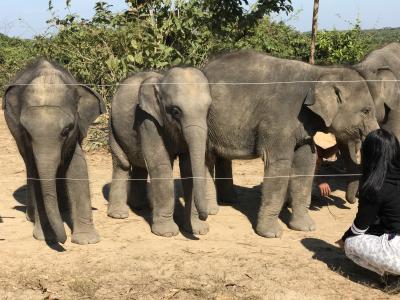 象の施設へ ウィンガボスィンサカン バゴー市郊外パヤジ