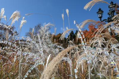 秋の優雅な箱根旅行♪ Vol.13 仙石原:ガラスの森美術館 紅葉ときらめくガラスの競演♪