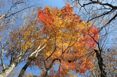 秋の優雅な箱根旅行♪ Vol.17 仙石原:ガラスの森美術館 紅葉ときらめくガラスの競演♪