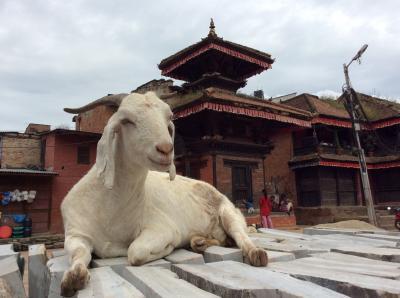 神々と出会うネパール カトマンドゥ盆地世界遺産を巡る旅⑤ チャングナラヤン&バクタプル