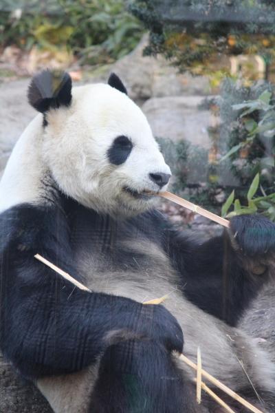 パンダ目当ての1日