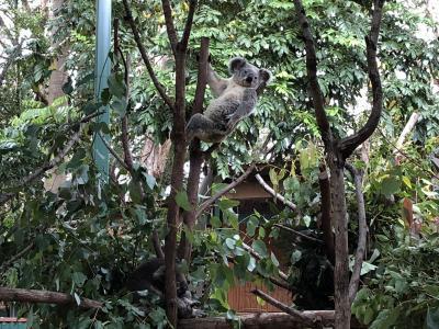 0歳児とゴールドコースト◇Currumbin Wildlife Sanctuaryでコアラと記念撮影( 3、4、5日目)