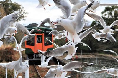 ゆりかもめ舞う佐久米駅その後の様子と奥浜名湖自然歩道歩き♪