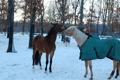 冬・北海道!余市・小樽・ノーザンホースパークへ1泊2日の旅、その3(愛らしい馬たちに出会いました)