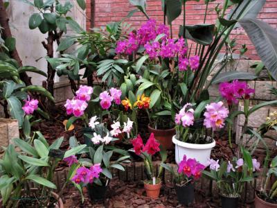 2018年11月 山口県・宇部市 ときわ公園・世界を旅する植物園に行きました。