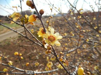 1月8日、所沢市南永井の風景