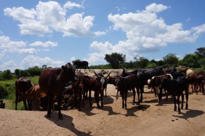 年末年始 東アフリカ ウガンダへ。過保護な一人旅 5泊7日 ②ムブロ 、ムバララ