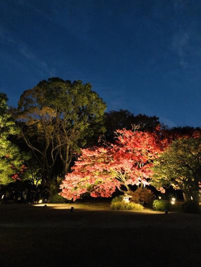 六義園の紅葉☆ライトアップ