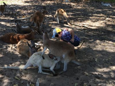 久しぶりの脱アジア!パースで過ごす家族4泊の旅。その2:カンガルーとのふれあい編