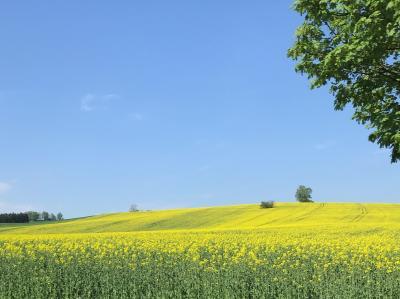 ☆春のプラハでモルダウを~♪.:*ハンガリー・スロバキア・チェコ周遊10日間 vol.25 菜の花畑と林檎の白い花のトンネルを抜けて~可愛いらしいテルチの街へ♪