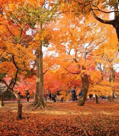 東福寺の紅葉は やっぱりすごい!