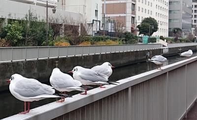 昼休み、職場近くで・・・、鳥たちも昼休みタイム?