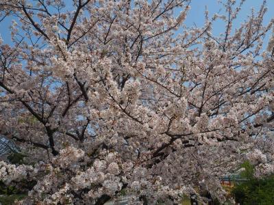 2019年4月 週末温泉旅 in 鬼怒川 ~ ポルシェマカンを借りて行ってみる「ホテルハーヴェスト鬼怒川」
