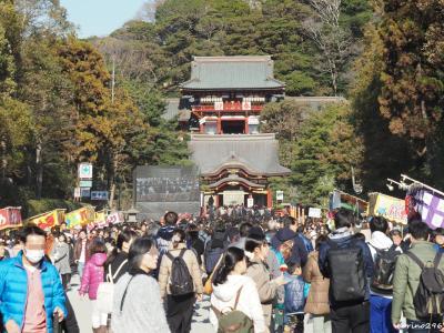 2019 鎌倉へ初詣、早咲きの梅と桜も楽しみに