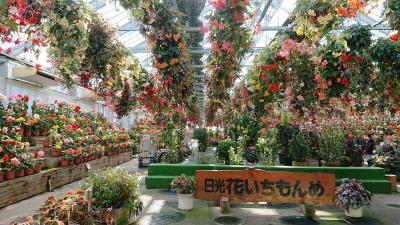 塩原温泉に行きました。「新生姜ミュージアムと花・植物・紅葉観覧に中塩原湯巡りの旅」(2018.11・湯宿梅川荘)  part3