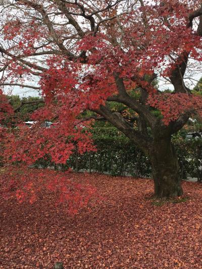 12月の紅葉 初冬の京都1泊2日旅 桂離宮/嵐山編