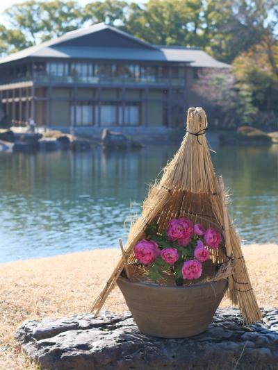 徳川園の寒牡丹