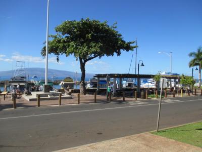 シニアのクルーズ4回目、ハワイ4島クルーズの10日間 その2 マウイ島