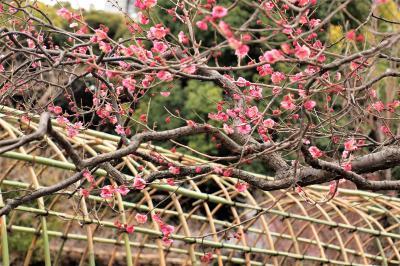 向島百花園には静かに春がやってきています♪