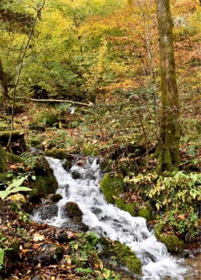 11月の栃木 水辺の紅葉探しドライブ&ゆるトレッキング