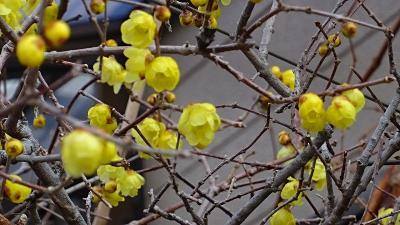 街歩き 宝塚市安倉地区へ花を探して その1。