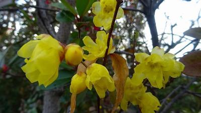 街歩き 宝塚市安倉地区へ花を探して その2。