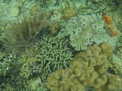 珊瑚の楽園 インドネシア・マナド その3