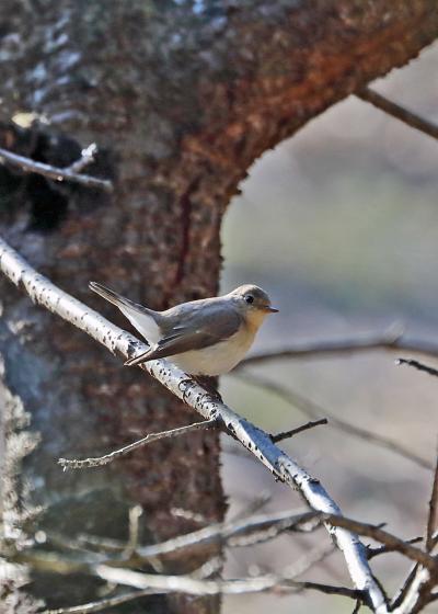 2019年1月野鳥撮影記録  Ⅵ