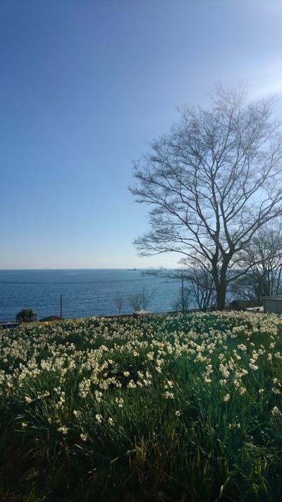 広島☆やぶ椿と水仙の里と絶景ホテル