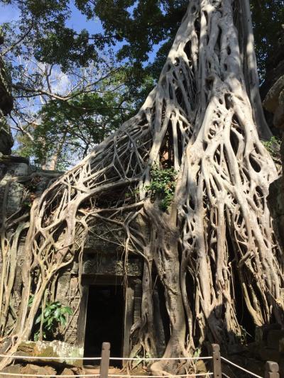 世界遺産の旅☆カンボジア シェムリアップ1人旅①
