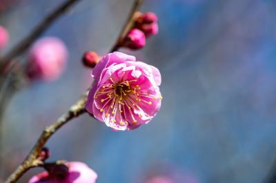 早春の花in農業公園 2019