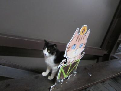 台湾の猫村 猴トン(ホウトン)