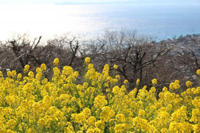 菜の花ウォッチングと徳富蘇峰記念館見学