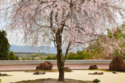 ひとりお花見部 2018② 西山の桜~嵐山の夜桜 一日め後半篇