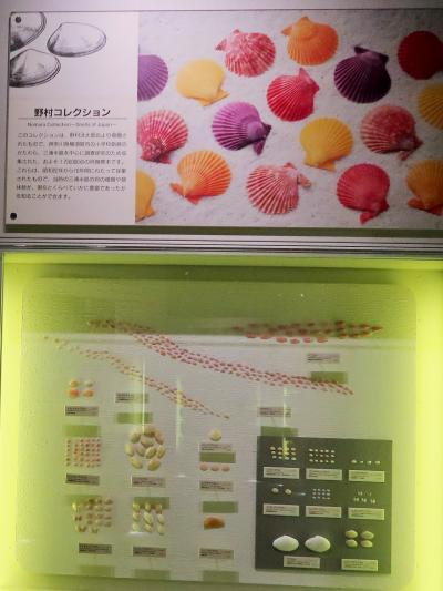 神奈川県立生命の星・地球博物館-5 ジャンボブック展示室で ☆自然界のバラエティー