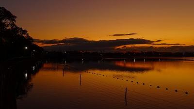 早朝散歩 瑞ヶ池へ日の出を見に行きましたが、日の出の撮影は無理で、花の撮影をしました 上巻。