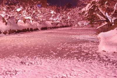 山形・秋田・青森で年末寒波に突入・後編。 弘前城の冬に咲くさくらと青森初詣