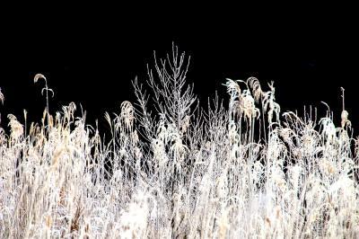 ◆白霜の涌井の清水&垂氷の銚子ヶ滝