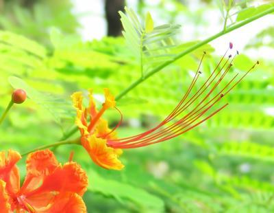 Thailand ノスタルジックバンコク(3/13)  ラマ9世公園  Suan Luang Park ~ミツバチばあやの冒険~